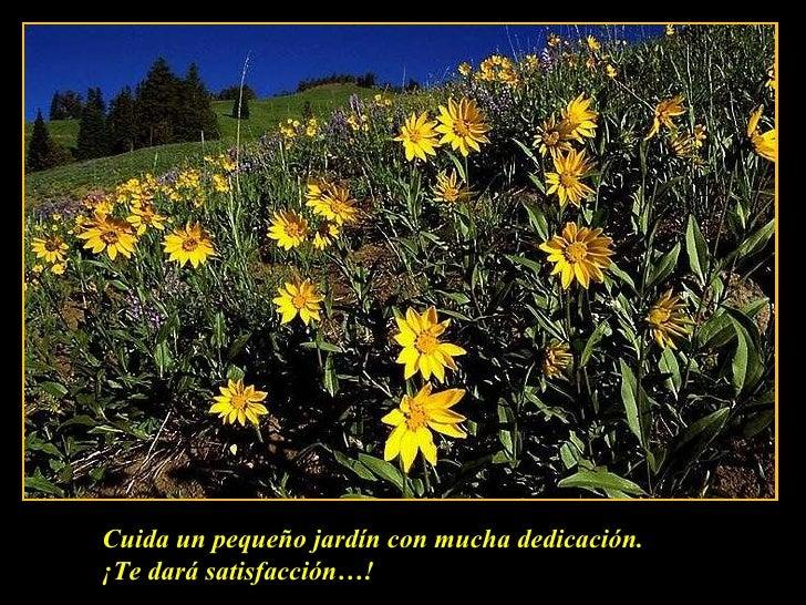 Cuida un pequeño jardín con mucha dedicación. ¡Te dará satisfacción…!