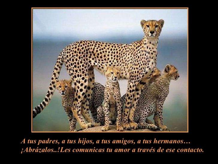 A tus padres, a tus hijos, a tus amigos, a tus hermanos… ¡Abrázalos..!Les comunicas tu amor a través de ese contacto.