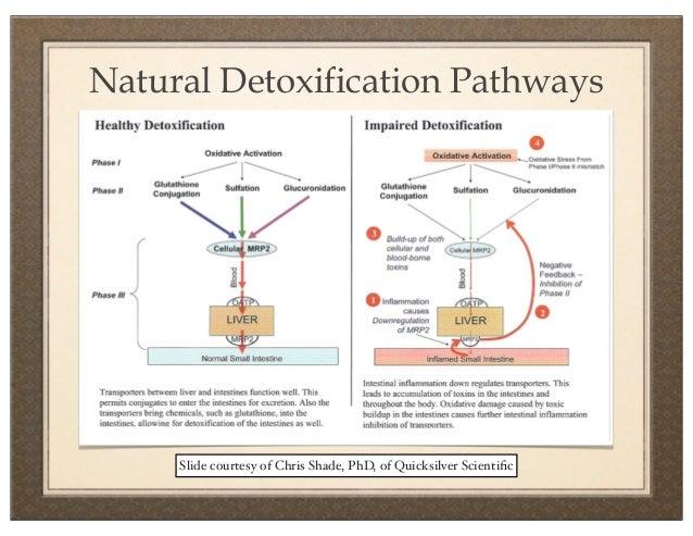 Detoxification of quicksilver scientic 16 disrupting the detoxification ccuart Gallery