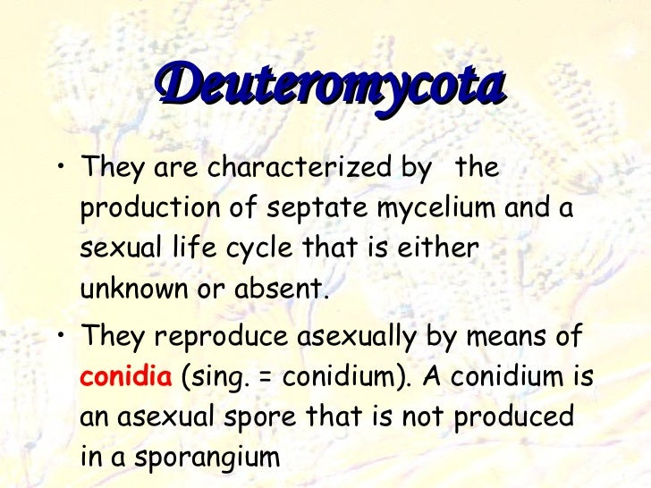 Deuteromycota asexual spores