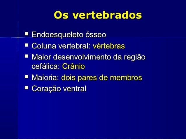 Os vertebrados   Endoesqueleto ósseo   Coluna vertebral: vértebras   Maior desenvolvimento da região    cefálica: Crâni...