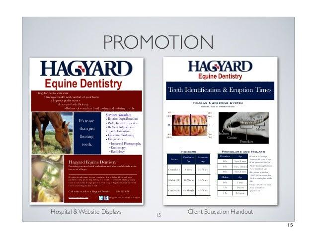 PROMOTION Equine Dentistry  Equine Dentistry  Teeth Identification & Eruption Times  Regular dental care can: • Improve hea...