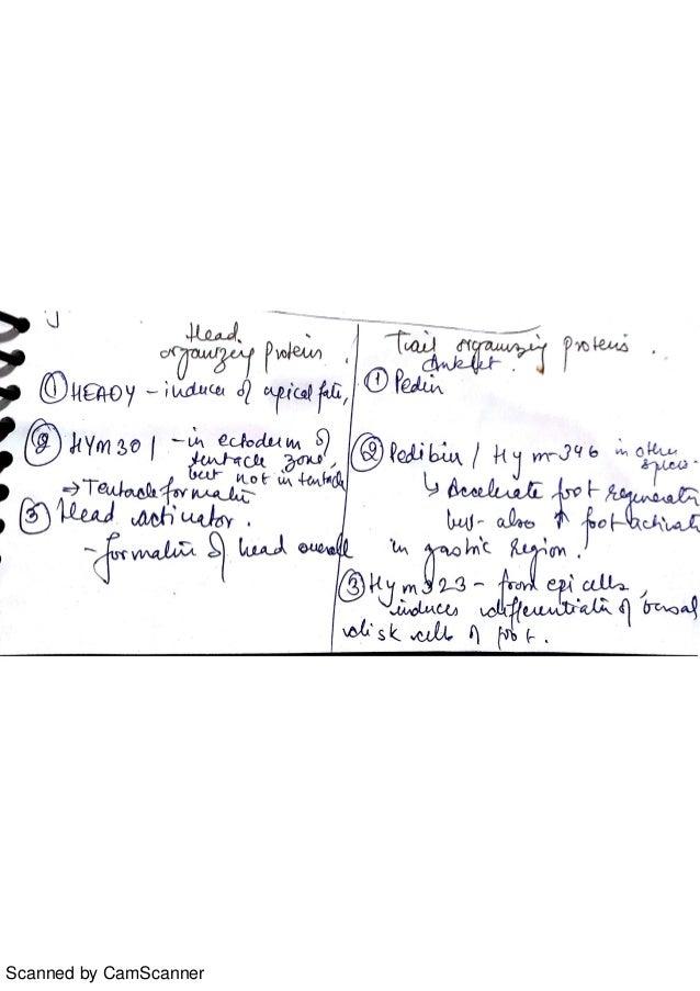 developmental biology notes Download notes on developmental biology download free online book chm pdf.