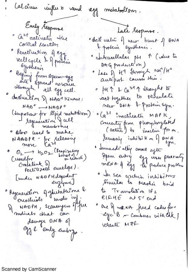 Developmental biology notes-Zoology, third year, Delhi