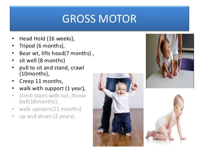 Gross Motor Fine Motor Language Cognitive/Social/Adaptive Older children