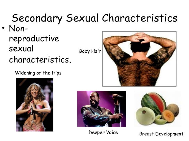 Secondary sexual characteristics psychology