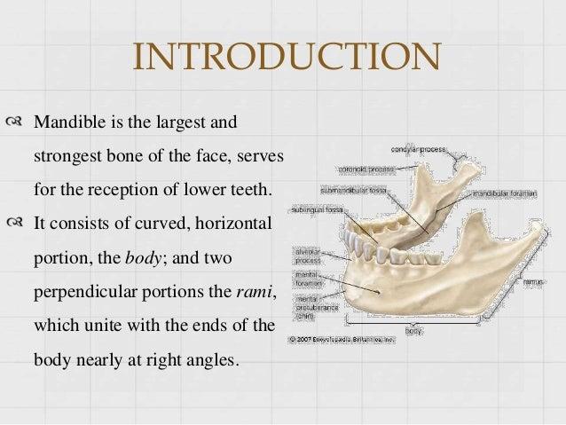 Development of mandible Slide 3