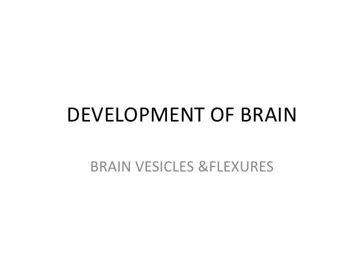 DEVELOPMENT OF BRAIN  BRAIN VESICLES &FLEXURES