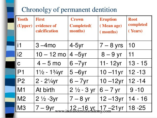 Development and eruption of dentition /certified fixed