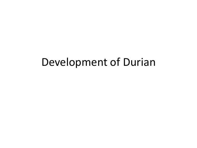Development of Durian