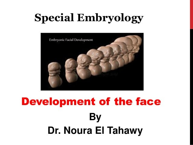 Development of the face  By  Dr. Noura El Tahawy  Special Embryology