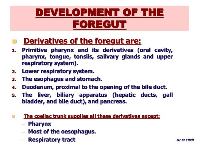 3468556 likewise Development Of Head And Neck Editted as well 7551103 further Development Of Foregut further D Ejh. on ventral cavity