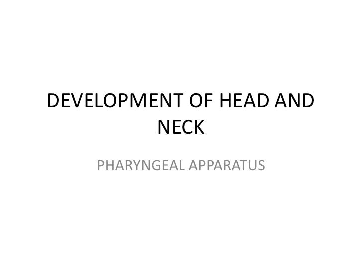 DEVELOPMENT OF HEAD AND         NECK    PHARYNGEAL APPARATUS