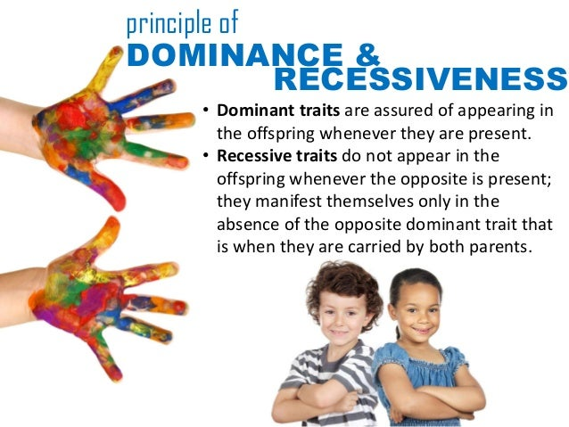 principle ofDOMINANCE &             RECESSIVENESS    • Dominant traits are assured of appearing in      the offspring when...