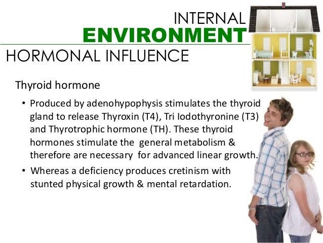 INTERNAL               ENVIRONMENTHORMONAL INFLUENCEThyroid hormone • Produced by adenohypophysis stimulates the thyroid  ...