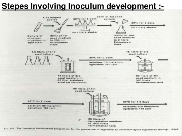 Development Of Inoculum Buildup