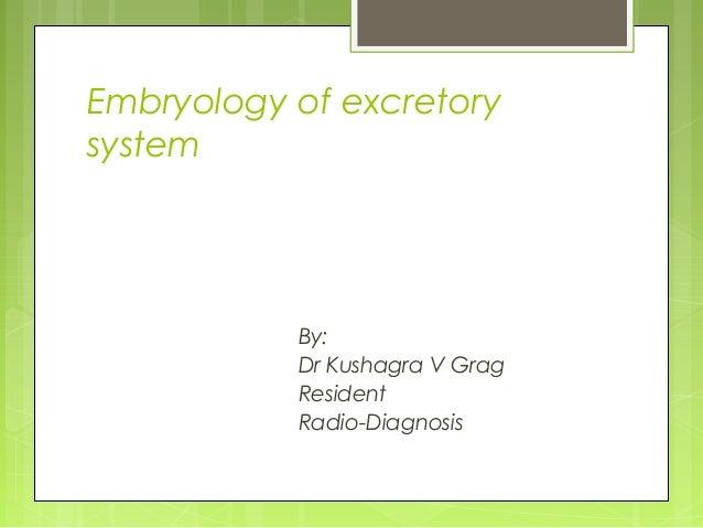 Embryology of excretory system  By: Dr Kushagra V Grag Resident Radio-Diagnosis