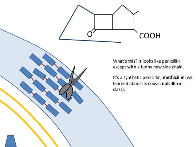 membrane O COOH Look! A celphalosporin! It's a new drug with the structure of a penicillin except...