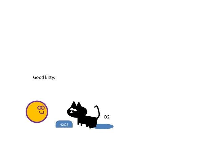 H2O2 O2 Good kitty.