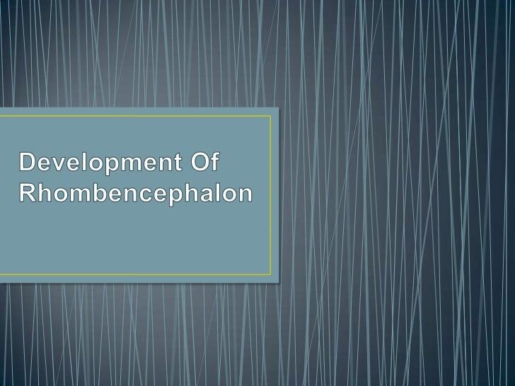 • 1.Metencephalon(from pontine flexure to  rhombencephalic isthmus)• 2.Myelencephalon(R.I to cervical flexure)