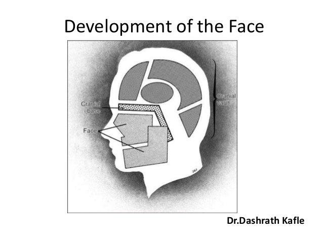 Development of the Face                  Dr.Dashrath Kafle