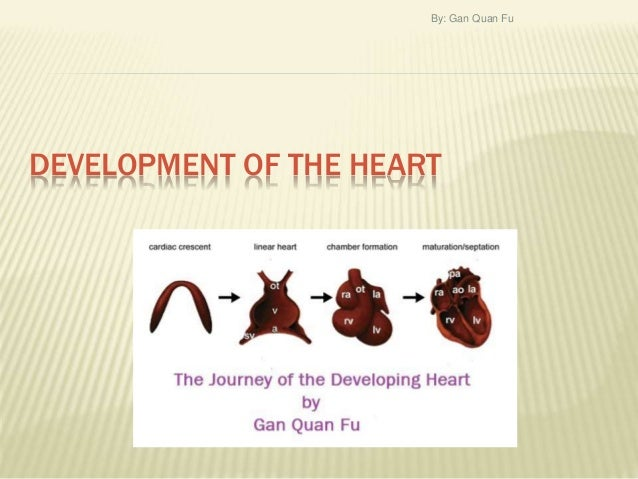 DEVELOPMENT OF THE HEART By: Gan Quan Fu