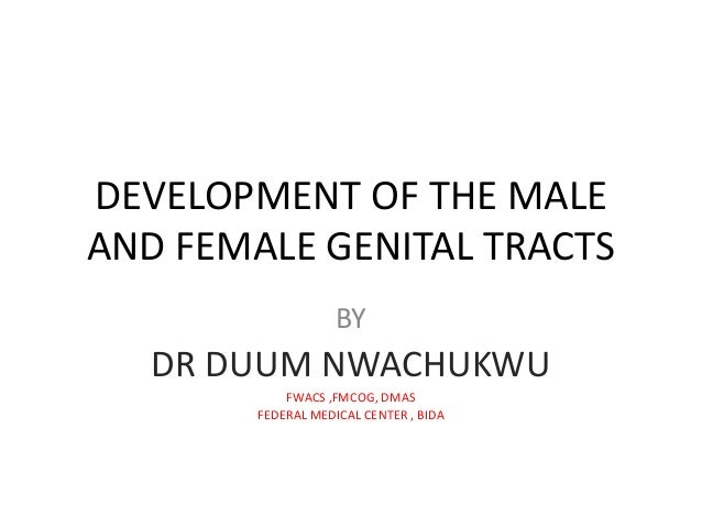 Development Of The Male And Female Genital Tracts