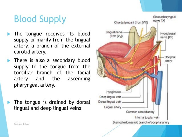Development of tongue, Speech & Prosthodontic consideration