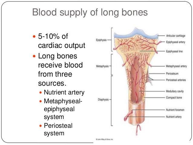 development,structure and organization of bone, Wiring diagram