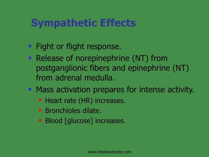 sympathetic division stimulation causes increased blood glucose