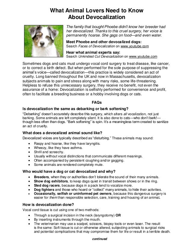 What Animal Lovers Need to Know                        About Devocalization                             The family that bo...
