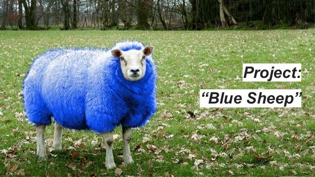 """Project: """"Blue Sheep"""""""