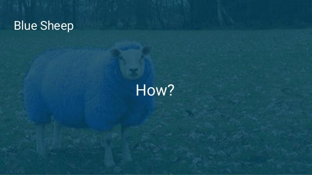 Blue Sheep How?