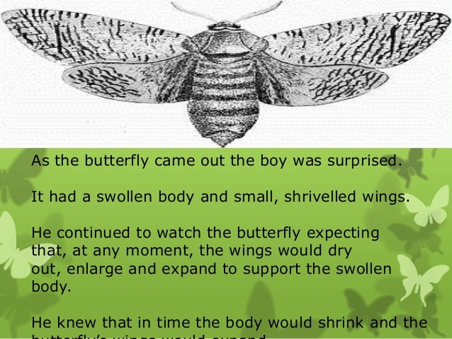 butterfly struggles an inspirational life lesson 9 as the butterfly