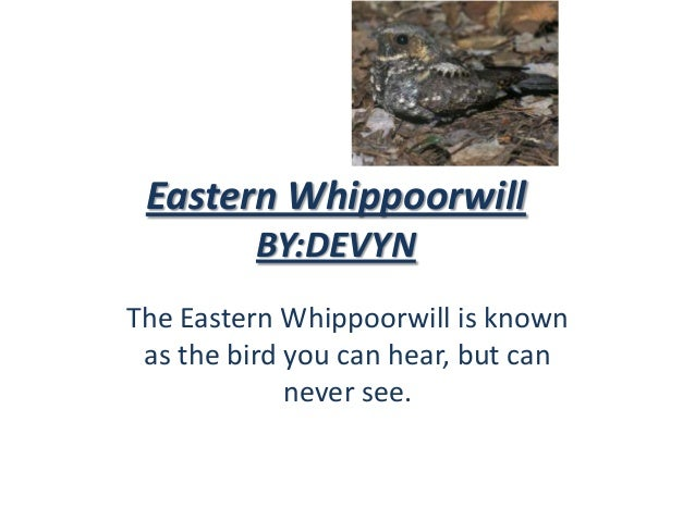 Eastern Whippoorwill         BY:DEVYNThe Eastern Whippoorwill is known as the bird you can hear, but can             never...