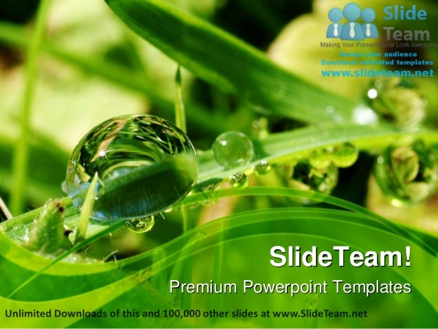 Dew drops on leaves nature power point templates themes and backgroun premium powerpoint templates toneelgroepblik Images