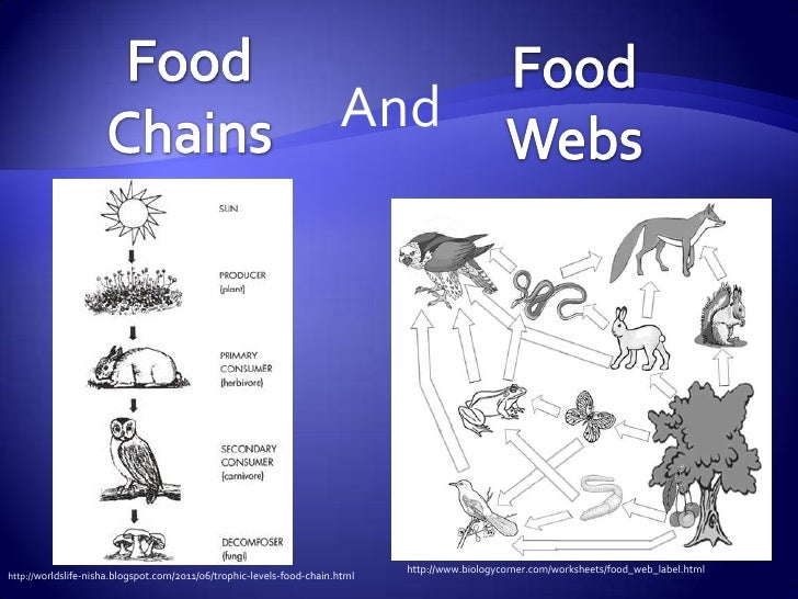 And                                                                              http://www.biologycorner.com/worksheets/f...