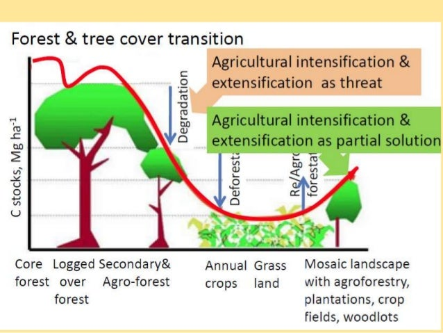the deforestation of the amazon a case study in understanding ecosystems and their value The case of reducing emissions from deforestation and forest  using panama as a case study their findings  advanced our understanding of the linked.