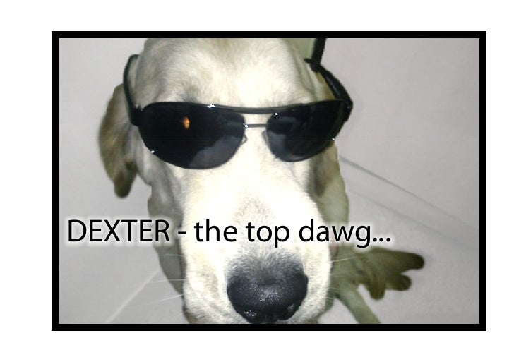 DEXTER - the top dawg...