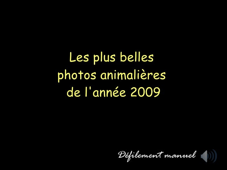 Les plus belles  photos animalières  de l'année 2009
