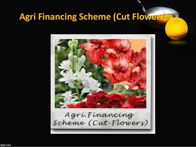ZTBL DFIs - Best of ppt flowers scheme