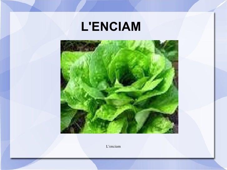 L'ENCIAM