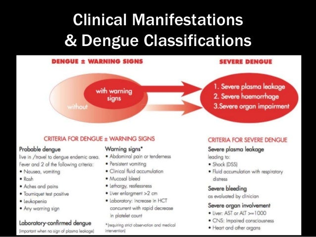 dengue fever mild What are the symptoms of dengue fever answer  skin rash, which appears two to five days after the onset of fever mild bleeding (such a nose bleed, bleeding gums, or easy bruising).