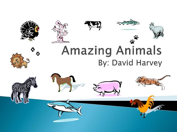 Amazing AnimalsBy: David Harvey<br />