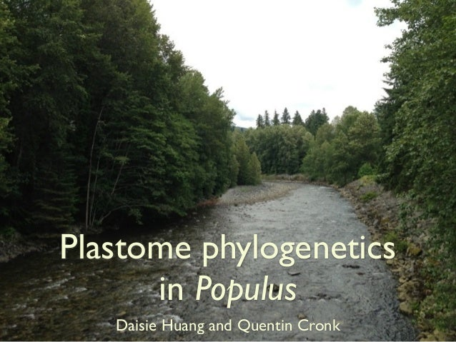 Plastome phylogenetics in Populus Daisie Huang and Quentin Cronk