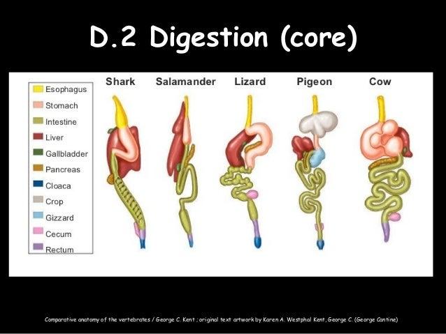 D human physiology syllabus statements
