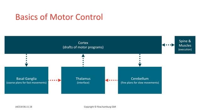 Basics of Motor Control Cortex (drafts of motor programs) Basal Ganglia (coarse plans for fast movements) Thalamus (interf...