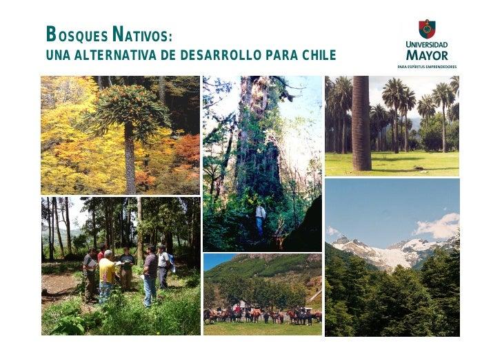 BOSQUES NATIVOS: UNA ALTERNATIVA DE DESARROLLO PARA CHILE