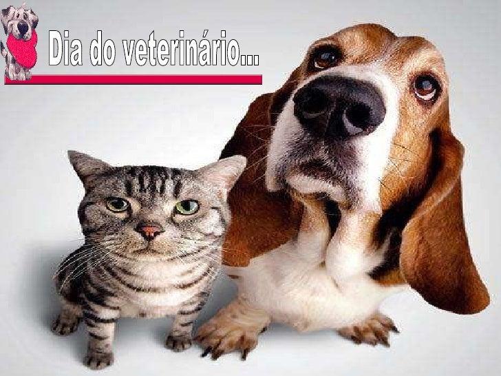 Dia do veterinário...