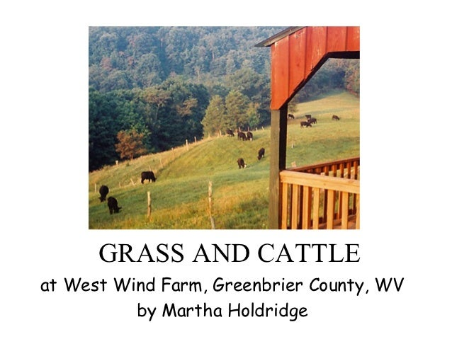 GRASS AND CATTLEat West Wind Farm, Greenbrier County, WV          by Martha Holdridge